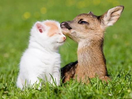 animals_bestfriends