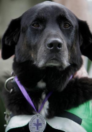 dog_hero