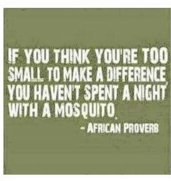 mosquito_african_proverb