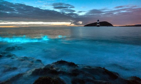 Wales Bioluminescence beach