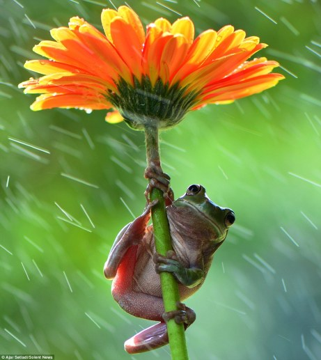 frogs_umbrellas_flower