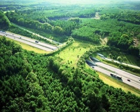natural_bridges_animals