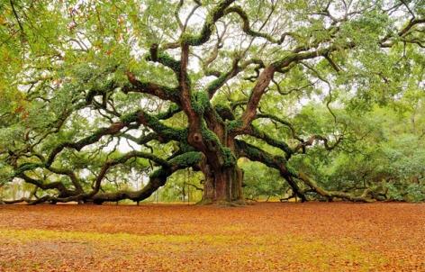 Beautiful-Tree-Photography