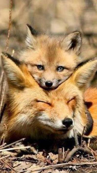 foxes_love