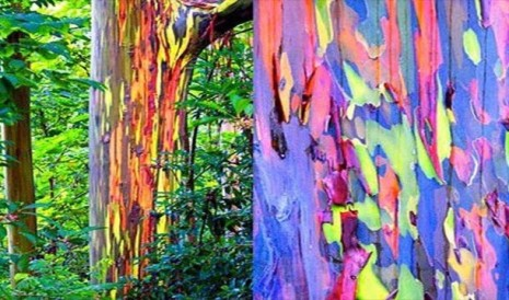 rainbow-trees