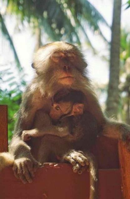 monkey_love