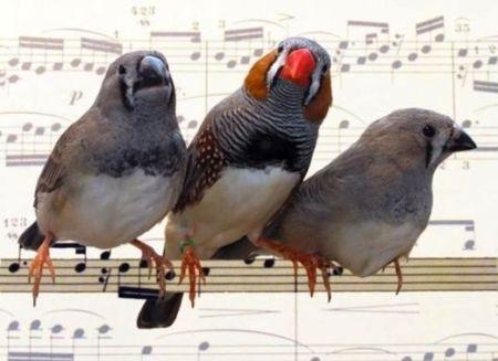 Birds_singing