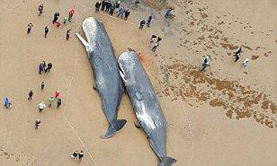 skegness whale1.jpg