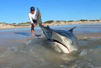shark-1-400x267