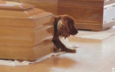 cocker-spaniel-next-to-coffin-of-a-victim-of-italy-earthquake