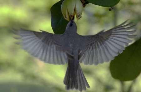 birdsmaintai