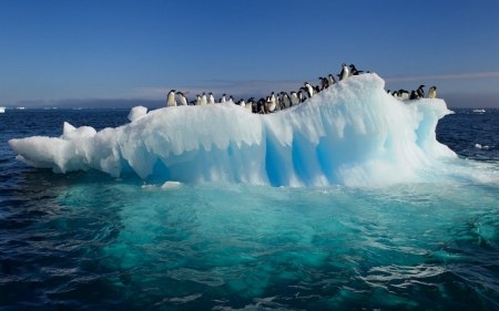 disaster_antarctica