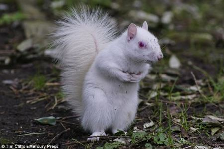 albinos_squirrel.jpg