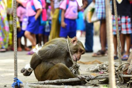 monkey-bound-india-1.jpg