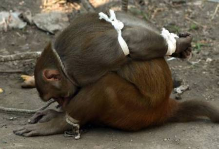 monkey-bound-india-2.jpg