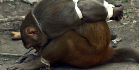 monkey-bound-india-3.png