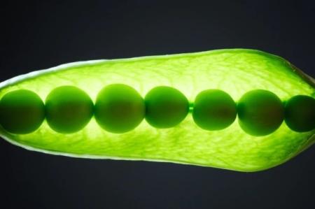 plant_peas