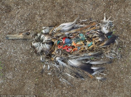 dead_albatros