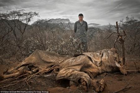 Dead_Elephant