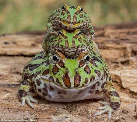 frog_pyramid.jpg