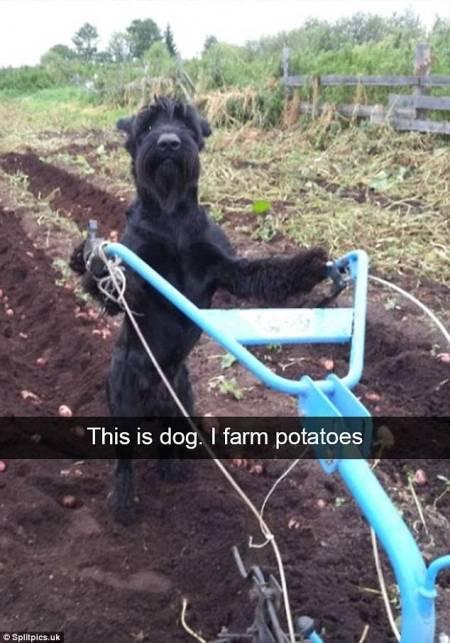 dog_farmer
