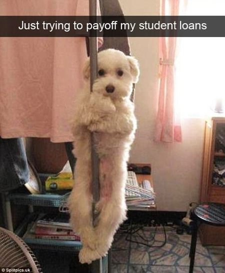 dog_pole_dance