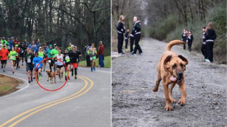 chien_semi_marathon