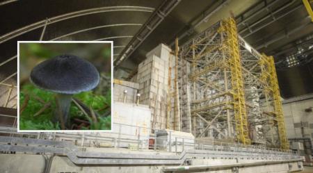 fungi-absorbs-radiation