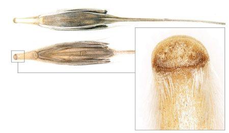 200228-Barley_grain