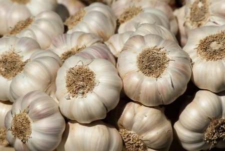 garlic-2097759_1920