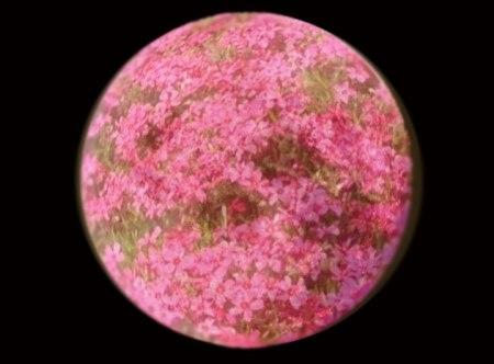 pink-moon_0